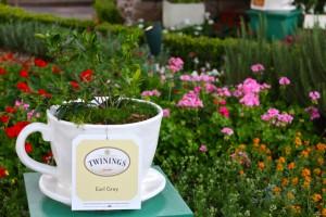 Earl Grey Tea Cup