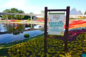 Festival Blooms
