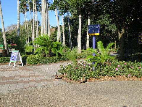 The path to the taxi stand is just to the left of the walkway to the Polynesian.