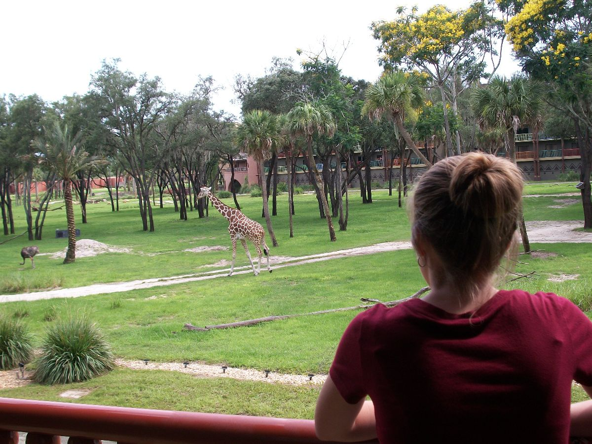 Review Of An Animal Kingdom Lodge Dvc Deluxe Studio Villa